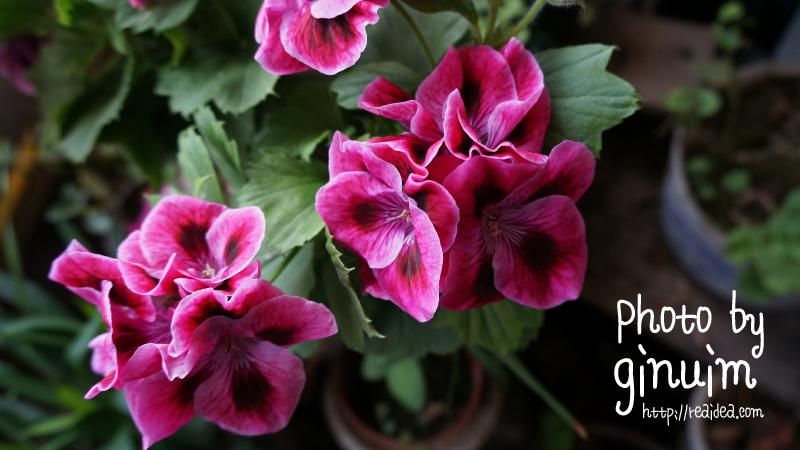 奶奶家的花